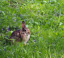 Rabbit in the Grass by rdshaw