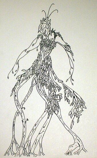 Root Walker by Tony Elliott