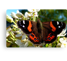 Natures Markings - Red Admiral Butterfly - NZ Canvas Print