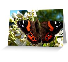 Natures Markings - Red Admiral Butterfly - NZ Greeting Card
