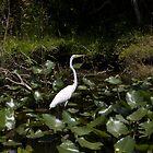 Snowy Egret by katyas1983
