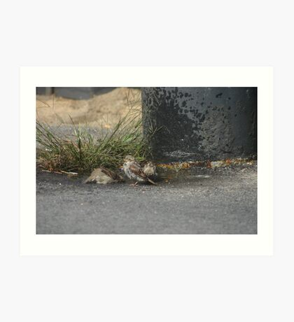 Bird bath Art Print