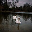 Swan Lake by GlennRoger