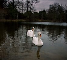 Swan Lake by GlennRoger