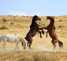 Desert Dance by Gene Praag