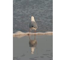 Gull on Glass Photographic Print