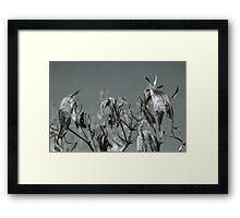 Milkweed HDR Framed Print