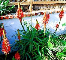 Aloe in Bloom by Robert Meyers-Lussier