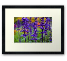 Purple Flowers of Unidentifiedness Framed Print