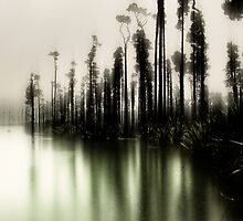 The Rainforest Waltzes With The Morning Mist by Peter Kurdulija