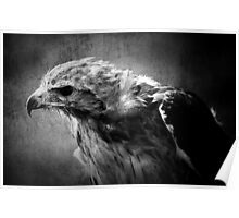 Black and white egale Poster