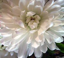 flower by frosty1
