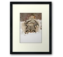 Whose The Pretty Puppy? Framed Print