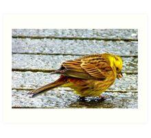 I wish these seeds weren't so hard! - Yellow Hammer - NZ Art Print