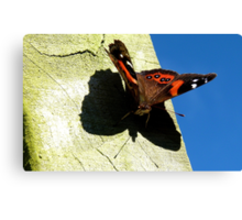 My Shadow! - Red Admiral Butterfly - NZ Canvas Print