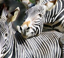 Zebras doing the wild thing by Kat Meezan