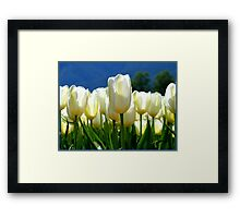 Standing Taller Than The Rest! - White Tulip Plantation - NZ Framed Print