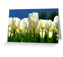 Standing Taller Than The Rest! - White Tulip Plantation - NZ Greeting Card