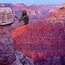 Rare Rock Climbing Ostrich by Ken Fortie