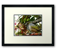 I think my Bride May Be On Her Way! - October - Silvereye - NZ ** Framed Print