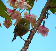 Get Ready She's On Her Way! - Maid Of Honor! - Silvereye by AndreaEL