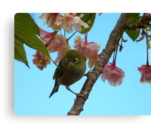 Get Ready She's On Her Way! - Maid Of Honor! - Silvereye Canvas Print
