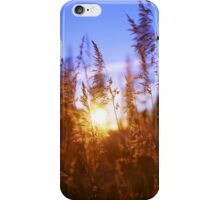 Sunset Grasses iPhone Case/Skin