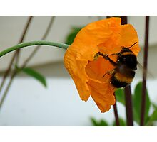Oops! We Are Falling! - Bumble & Poppy! - NZ Photographic Print