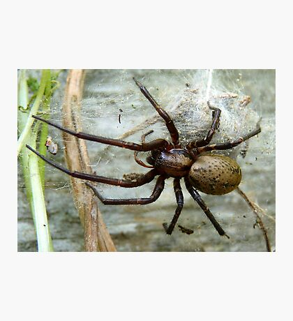 Guarding The Nest! - Massive Spider - NZ Photographic Print