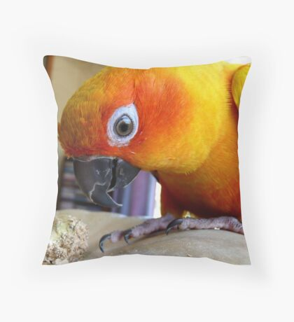This Pumpkin Stalk Is Tasty! - Sun Conure - NZ Throw Pillow