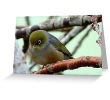 Monday Blues! - Silvereye - NZ Greeting Card