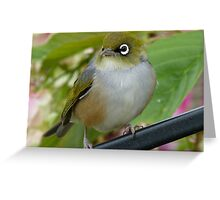 Beauty Is In The Eye Of The Beholder! - Silvereye - NZ Greeting Card