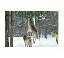 When Wolves Fly Art Print