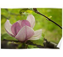 Tree flower Poster
