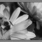 Bumbling Around in B&W by Cheri Perry