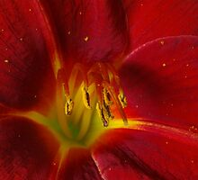 Day Lily. by Bette Devine