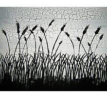 Wheat Photographic Print