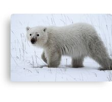 Polar Bear Cub Canvas Print