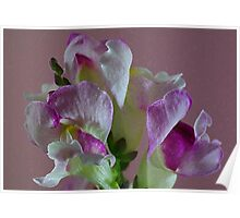 Snap Dragons Poster