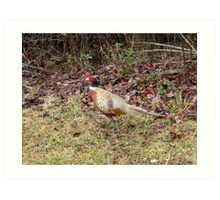 Pheasant In The Wild Art Print