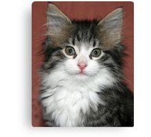 Meet Harry! Canvas Print
