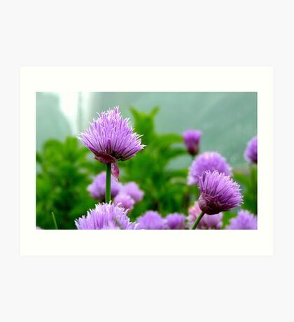 Chive Flower! - Chive - NZ Art Print