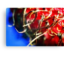 Rambutan detail Canvas Print