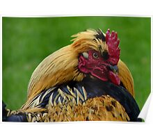 Strapping Young Fellow - Cockerel - NZ Poster