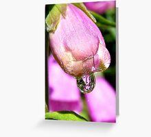Look Into My Crystal Drop - Foxglove - NZ Greeting Card