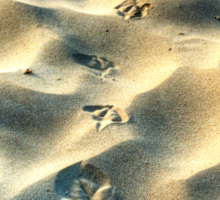 Steps in the sand Sticker