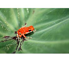 Red Ribbet Photographic Print