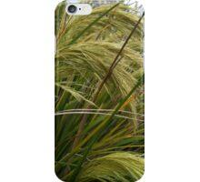 toetoe (New Zealand native grasses) iPhone Case/Skin