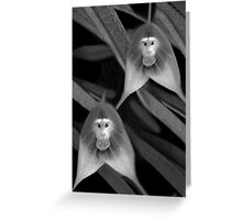 *•.¸♥♥¸.•* MONKEY ORCHID *•.¸♥♥¸.•* Greeting Card