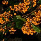 Berries by Melissa Contreras